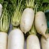田辺大根の通販/お取り寄せ&特徴!大阪なにわ伝統野菜【青空レストラン】