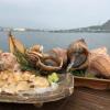本真つぶ貝@北海道様似町日高のつぶ貝セットの通販/お取り寄せ[青空レストラン 8月11
